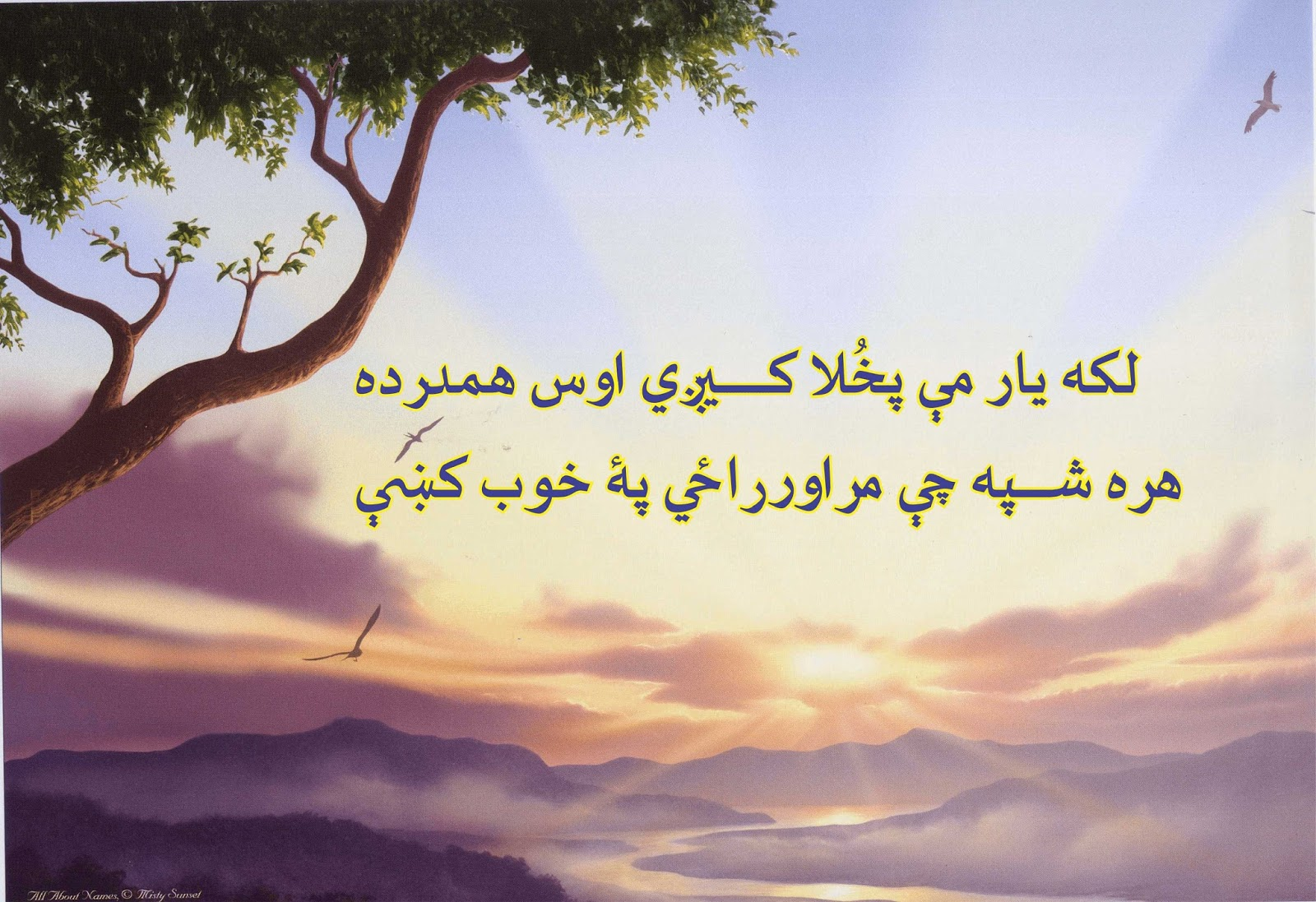 abdul rahman baba poetry in pashto   urdu cartoon jokes