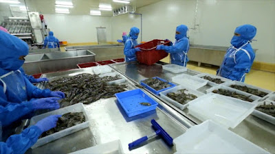 Understand Frozen Shrimp Factory Processing Step by Step