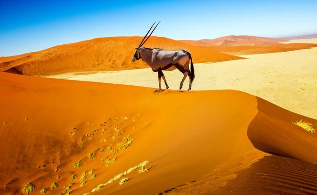 Xvlor Namib-Naukluft National Park is orange wilderness of 49,768 sq km