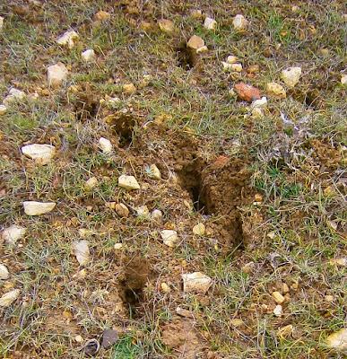 Rastro de Ciervos en la Serranía de Cuenca. Autor, Miguel Alejandro Castillo Moya
