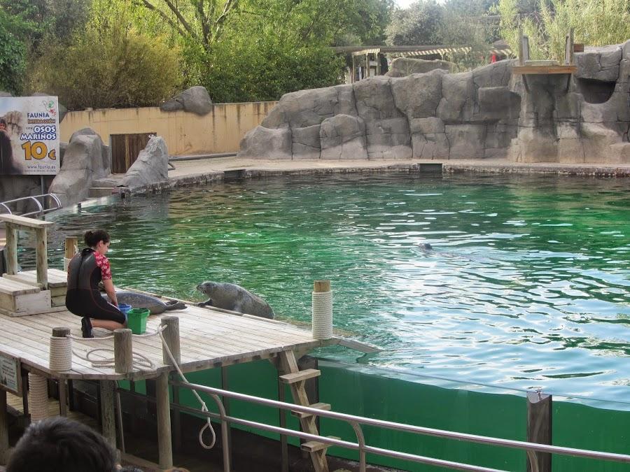 Teatro del Lago, dónde podrás disfrutar de exhibiciones de focas, osos y leones marinos.