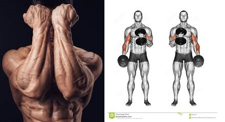 The Ultimate Forearm Workout & The 6 Best Forearm Exercises for Popeye Arms