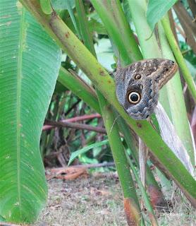 moth, Costa Rica