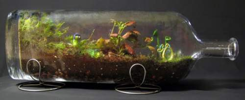 Biolojoy Terrariums