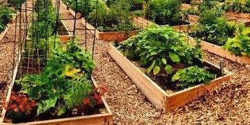 Superbe GrowUptown With Peterson Garden Project