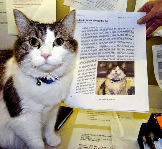 Oscar gato vidente
