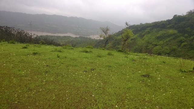 Meadow, monsoon flowers, Rain, Pune