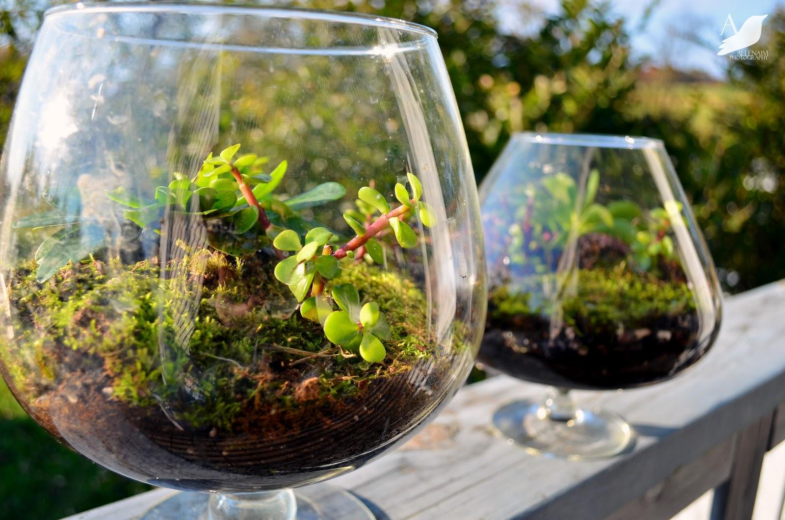 creative plant terrarium ideas gardening forums