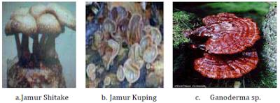 Mengidentifikasi Struktur,Ciri-Ciri dan Contoh dari Filum Basidiomycota (Basidiomycotiana)