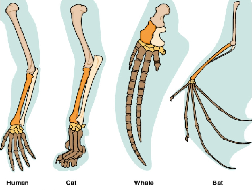 Comparative Anatomy - iAraby.net