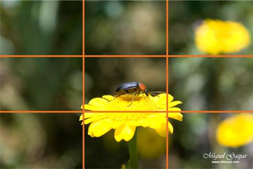 Como fazer enquadramento de fotos