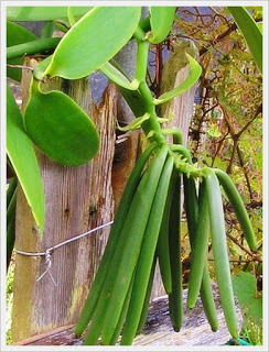 http://tipspetani.blogspot.com/2016/11/jenis-tanaman-perkebunan-paling.html
