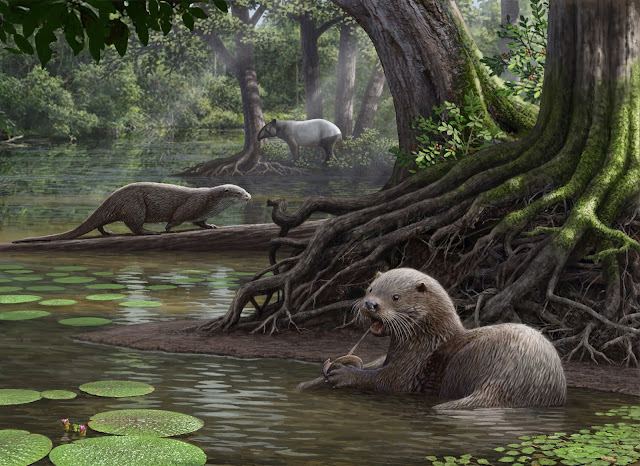 A giant, prehistoric otter's surprisingly powerful bite