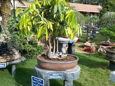 Mysore Ashrama Botanical Garden