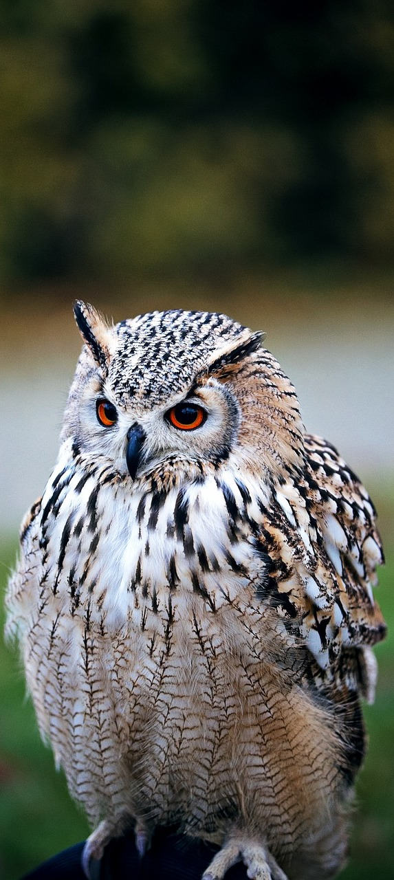Picture of a owl.