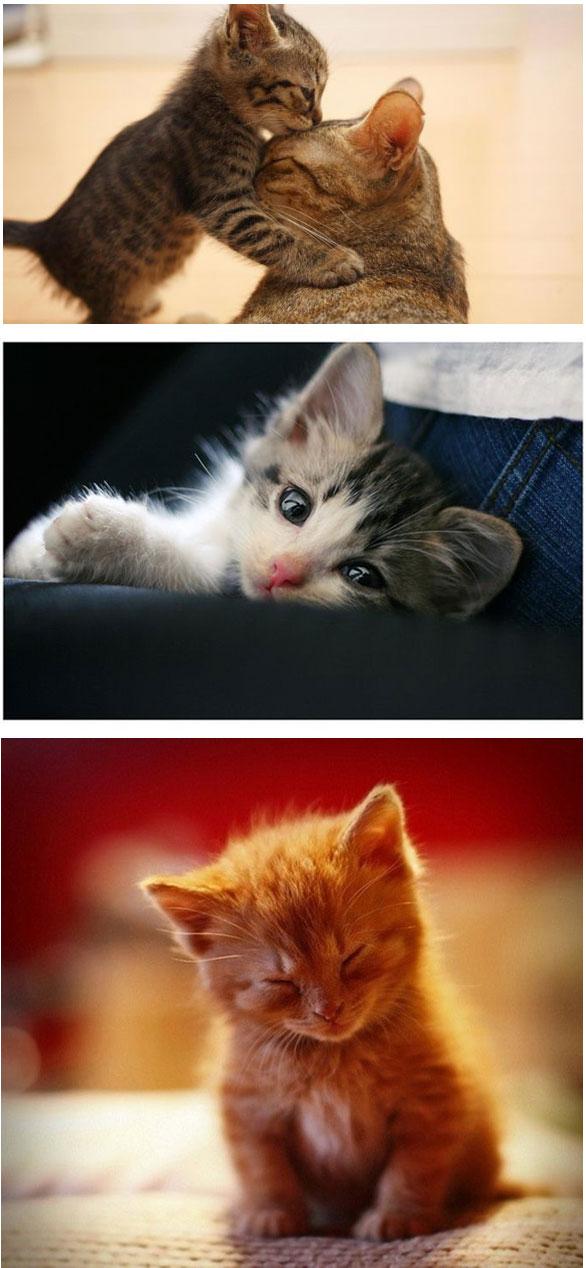 Gambar Kucing Yang Simple godean.web.id