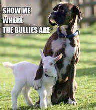 Dog Fun : Show me where the bullies are?