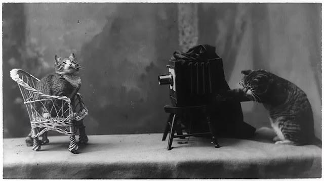 1900s: Foto d'epoca di gatti che fanno cose da umani