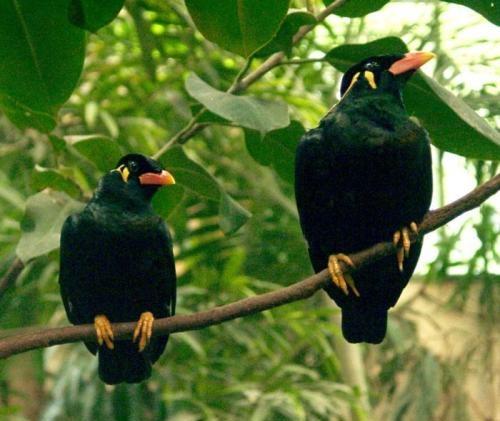 Birds Breeds Gallery - photo#15