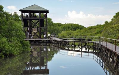 hutan-mangrove-tower-bali