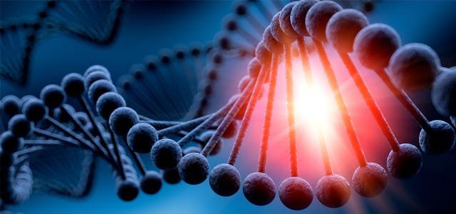 El acido desoxirribonucleico y su estructura