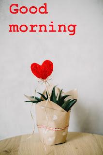 romantic good morning latest pic