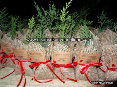 İstanbul filiz Serkan nikah bitkisi fidanı - 6