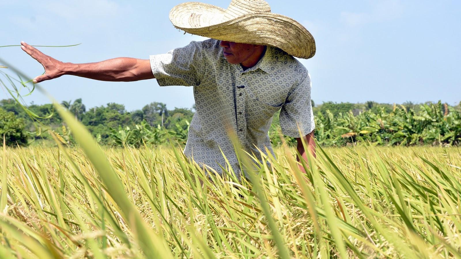 Danilo Medina se une a regocijo de agricultores en su día; reconoce su amor y entrega