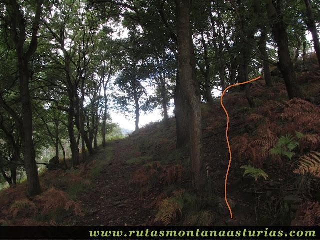 Ruta Bueño Peña Avis: Desvío junto a unos árboles.