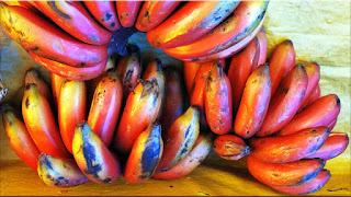 gambar buah pisang susu merah
