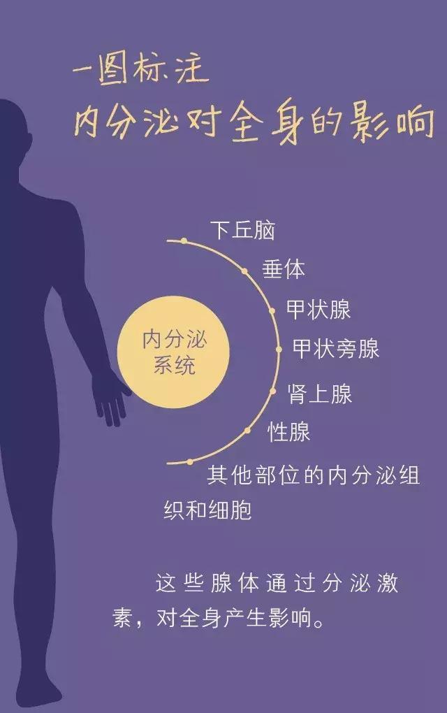 身體最怕「內分泌」跑偏!6個習慣讓它重回正軌(早睡、運動)