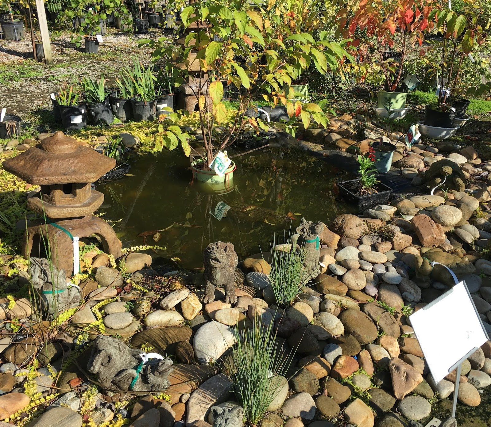 Miss Val\'s Creations: A Visit to A Local Garden Center