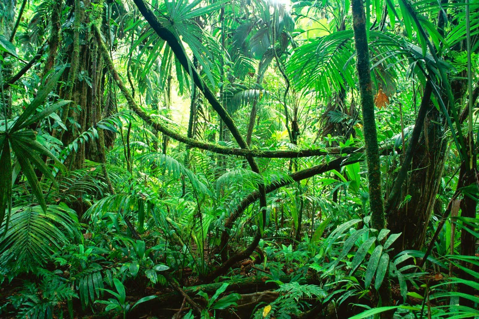 Pengertian Dan Jenis Jenis Ekosistem Rickypedia