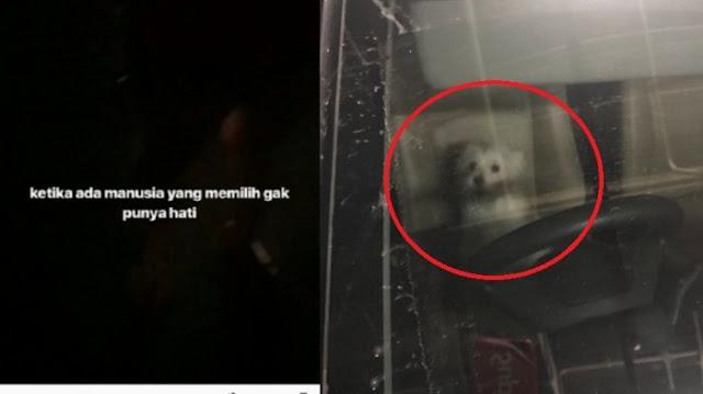 Tinggalkan Anjing di Mobil Selama 8 Jam Hingga Kehausan, Reaksi Pemilik Bikin Geram Netizen.
