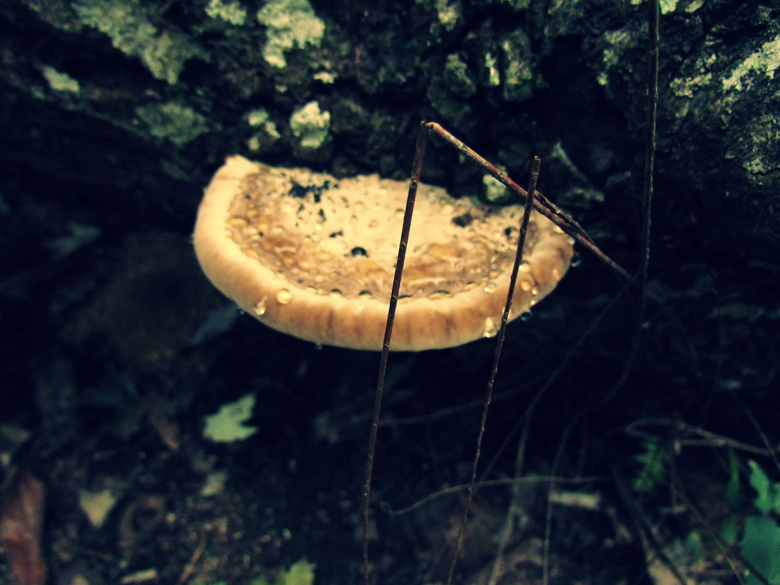 Mushroom Growing on Dark Tree Log in Wet Forest in the Autumn Months