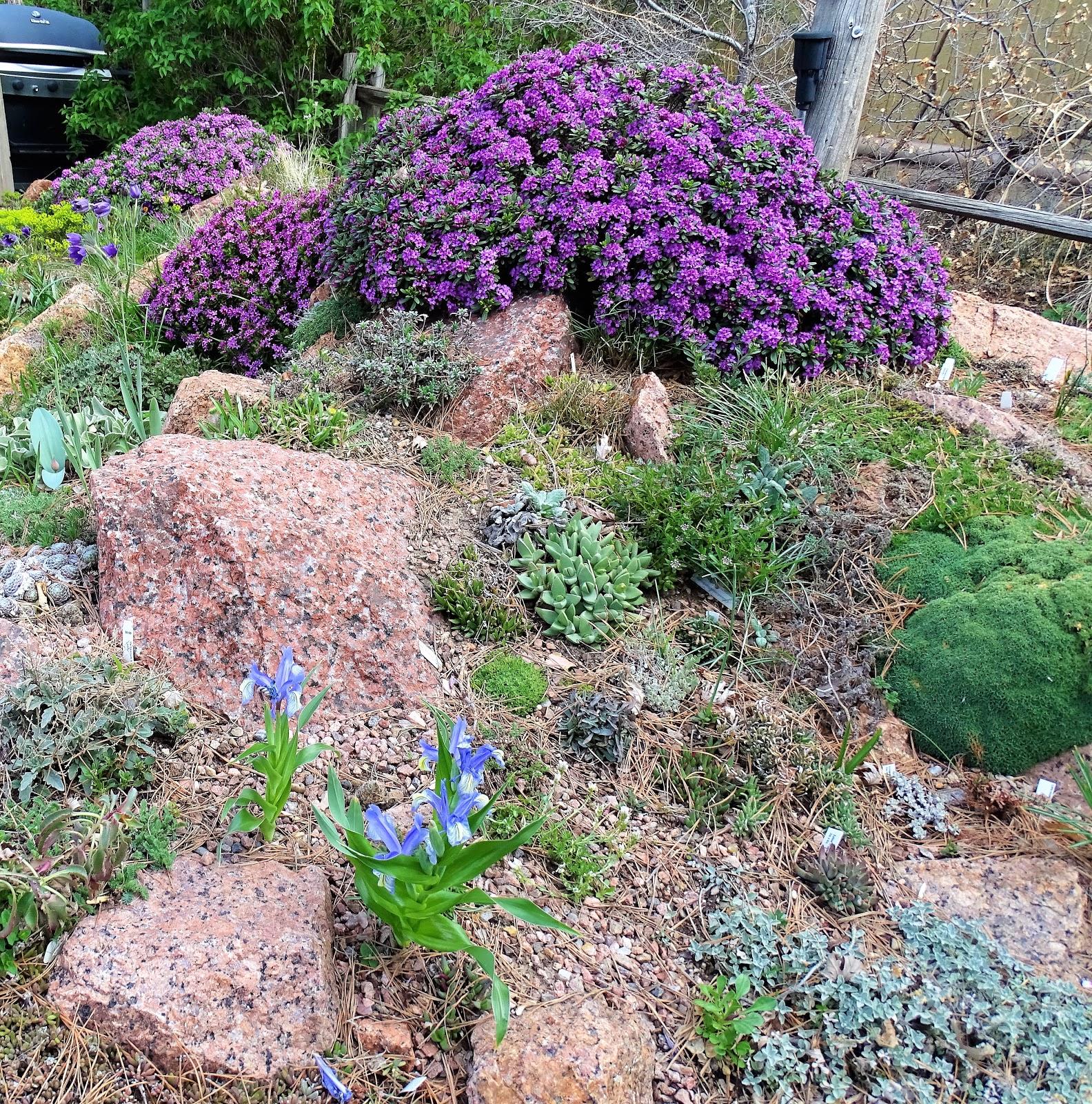 160 Best Daphne Images Daphne Plants Garden