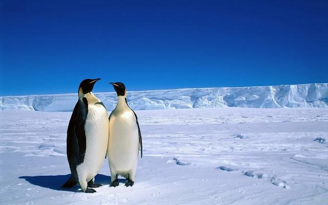 Twee pinguïns op het ijs