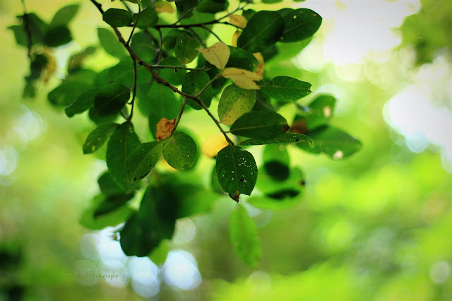 green leaves on lovely green background