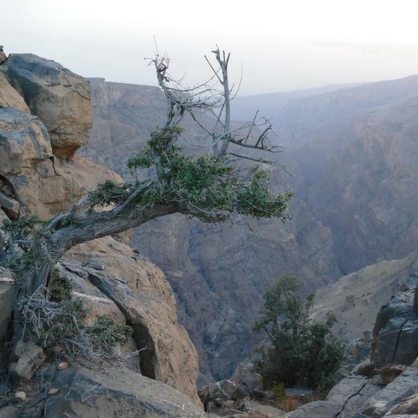 Alila Jabal Akhdar, Oman, Hotel, Sicht, Aussicht, Schlucht, View