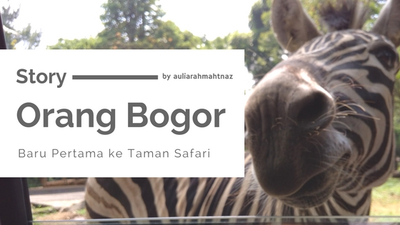 Perjalanan ke Taman Safari, Review Taman Safari