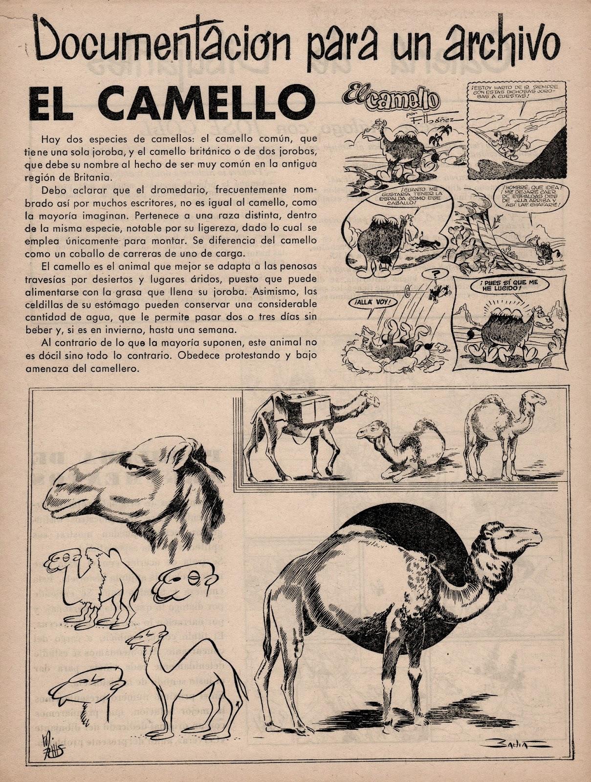 Alex nº 7, Símbolo 1955