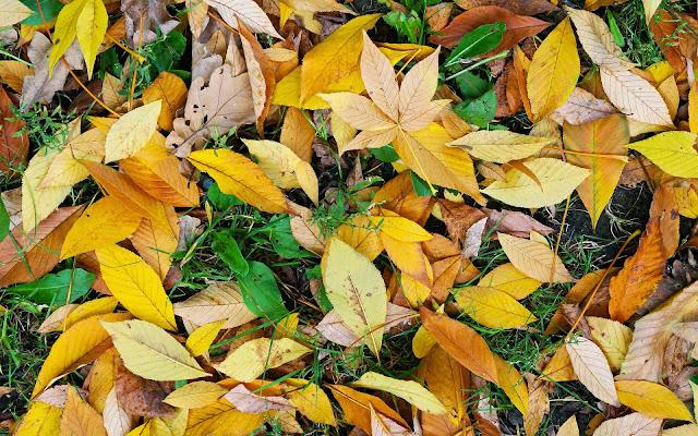 Foto geel oranje herfstbladeren op de grond