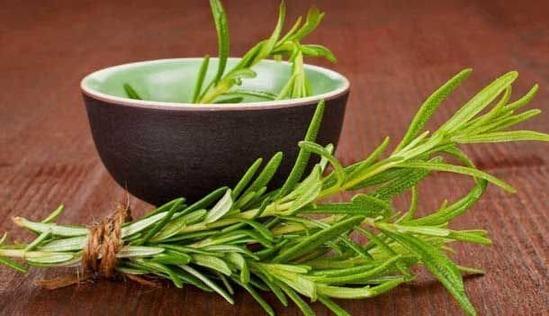 9 benefícios do alecrim à saúde