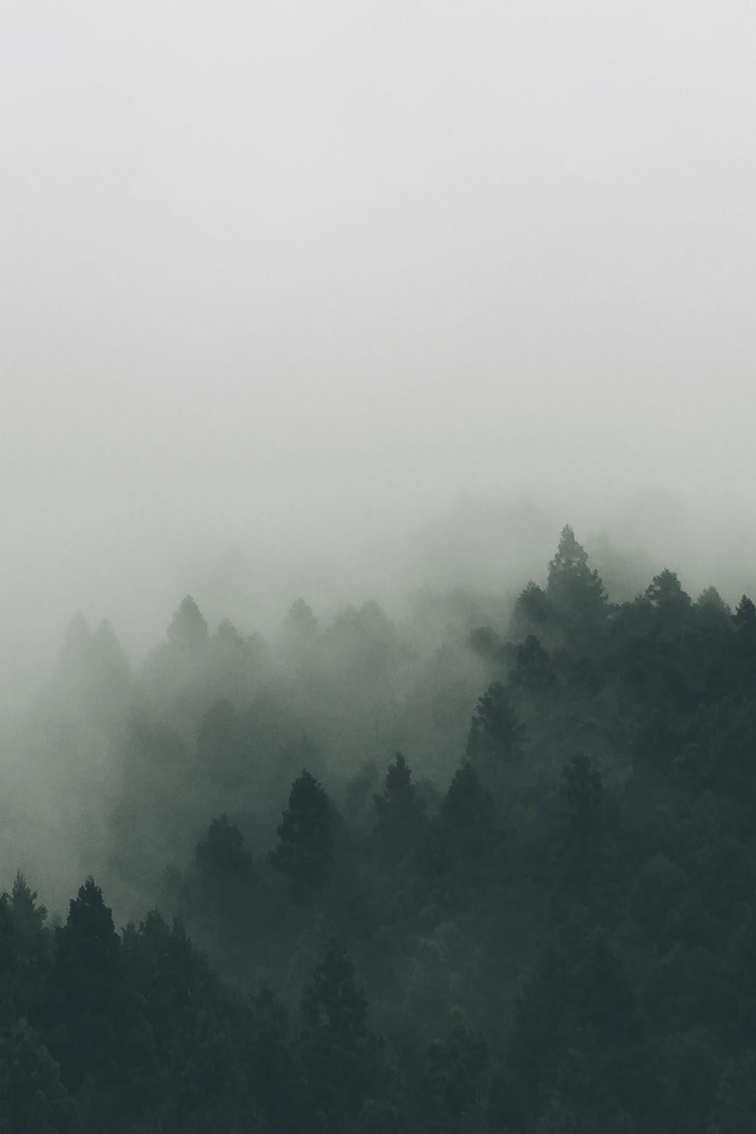 暗い森に白い霧