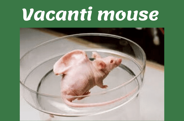 vacanti mouse