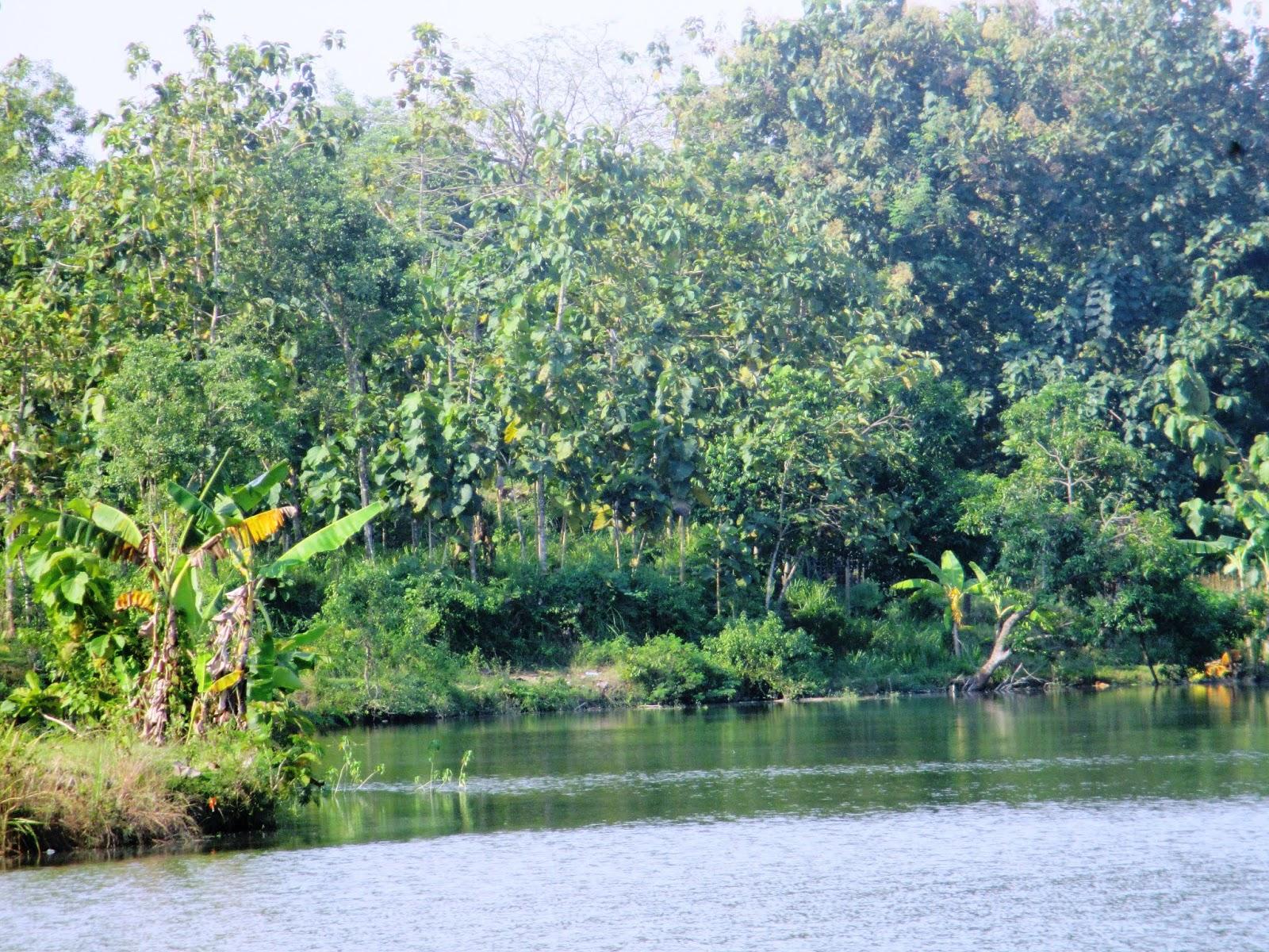 Jombang City Guide Hanyut Dalam Ketenangan Di Telaga Jambe