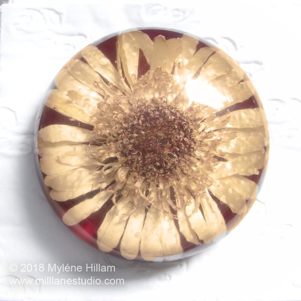 Dried white gerbera flower paperweight embedded in EasyCast epoxy resin with a red background.