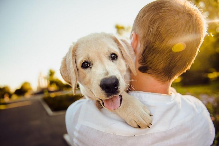 Suis-je Prêt à Adopter un Animal de Compagnie