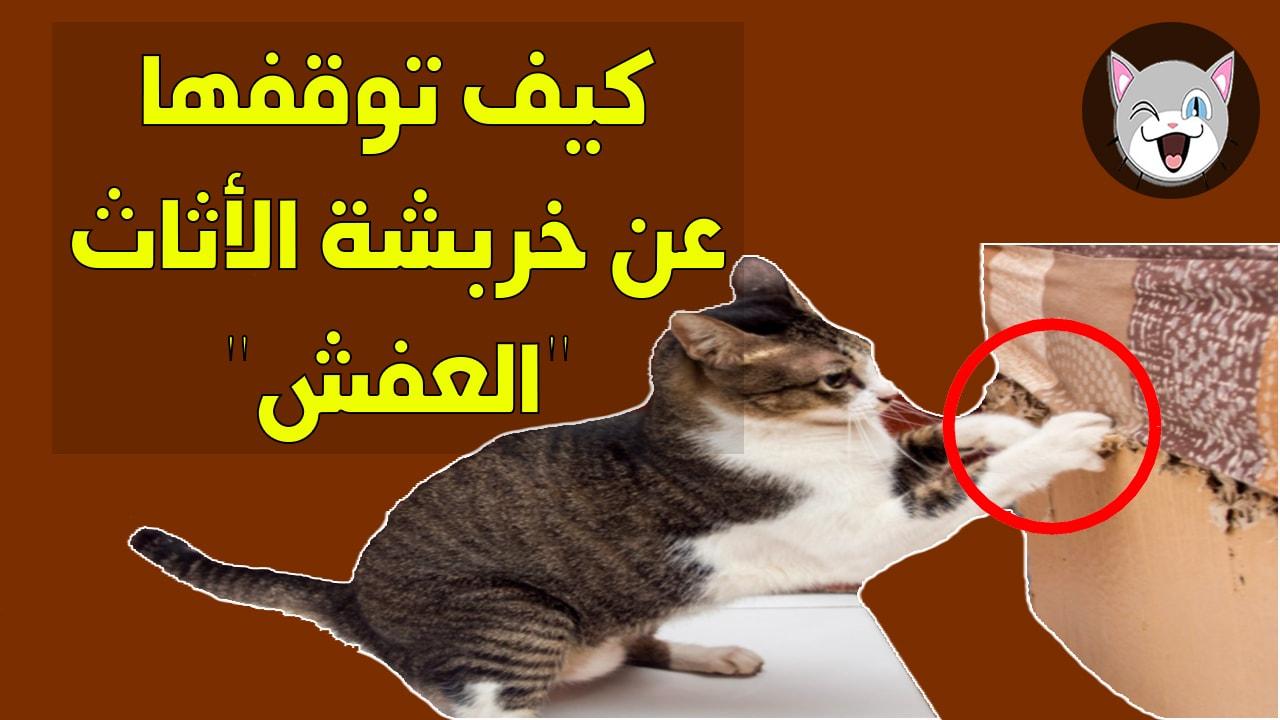 كيف نجعل القطط تتوقف عن خربشة أثاث البيت ؟