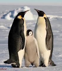 que son las relaciones familiares en biologia